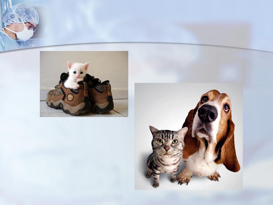Deney Hayvanı: Bilimsel araştırma, eğitim, deney, kontrol ve test amacıyla kullanılan her türlü omurgalı hayvan, Deney Hayvanı: Bilimsel araştırma, eğitim, deney, kontrol ve test amacıyla kullanılan her türlü omurgalı hayvan,