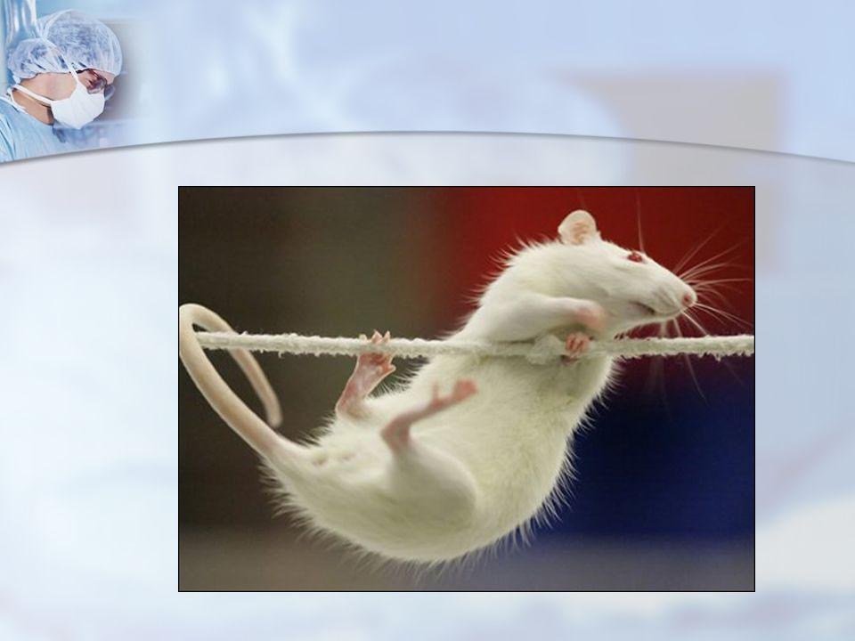ENDİKASYONLAR Deneyi sonlandırmak dışında, (Deneyin diğer aşamaları gibi önceden planlanması gerekir) deney hayvanlarının ciddi sağlık problemi (gıda ve sıvı alımının olmaması, paralizi, ciddi diare, yaygın alopesi, asit, tümör gelişimi vb.) deney hayvanlarının ciddi sağlık problemi (gıda ve sıvı alımının olmaması, paralizi, ciddi diare, yaygın alopesi, asit, tümör gelişimi vb.) davranış bozukluğu (ajitasyon ve saldırganlık) olduğunda ötanazi uygulaması gereklidir.