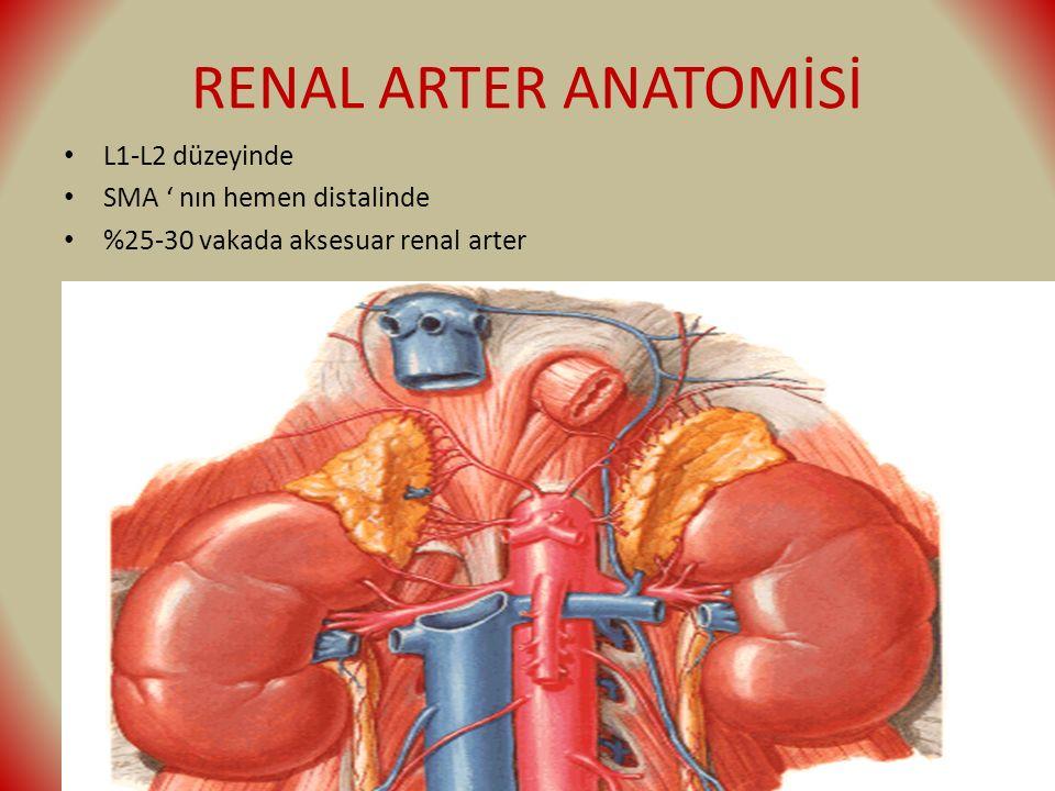 RENAL ARTER ANATOMİSİ L1-L2 düzeyinde SMA ' nın hemen distalinde %25-30 vakada aksesuar renal arter