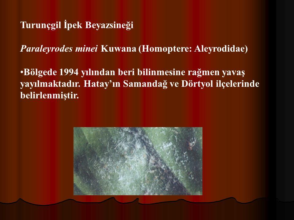 Turunçgil İpek Beyazsineği Paraleyrodes minei Kuwana (Homoptere: Aleyrodidae) Bölgede 1994 yılından beri bilinmesine rağmen yavaş yayılmaktadır.