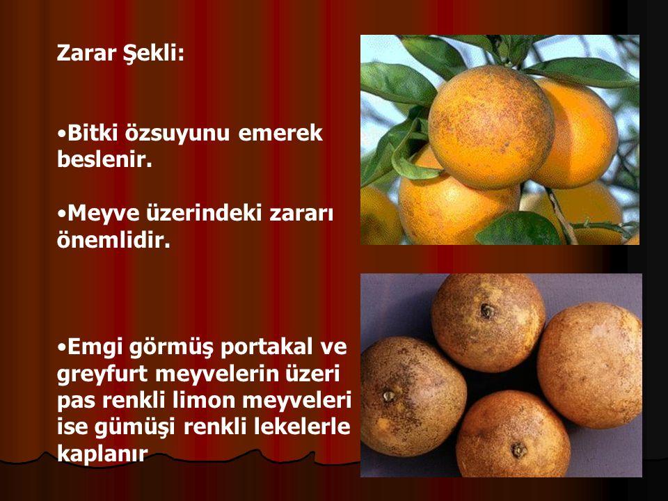 Zarar Şekli: Bitki özsuyunu emerek beslenir.Meyve üzerindeki zararı önemlidir.
