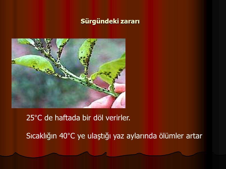 Sürgündeki zararı 25°C de haftada bir döl verirler.