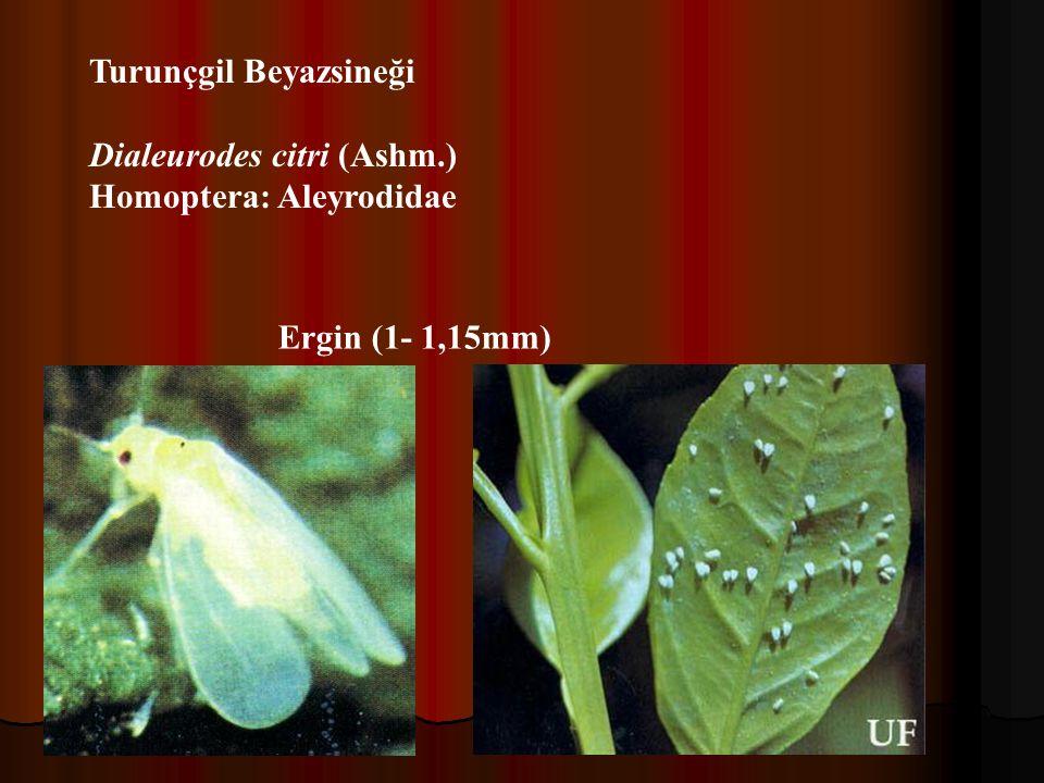 Tanımı: Silindir şeklinde, son kısma doğru hafifçe sivri, sarımsı veya hafif pembemsi renkli 2 çift bacağa sahip Dişi 0.17-0.18 mm, erkek ise 0.12-0.13 mm boyundadır.