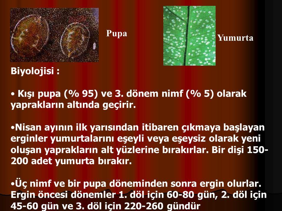 Yumurta Pupa Biyolojisi : Kışı pupa (% 95) ve 3.