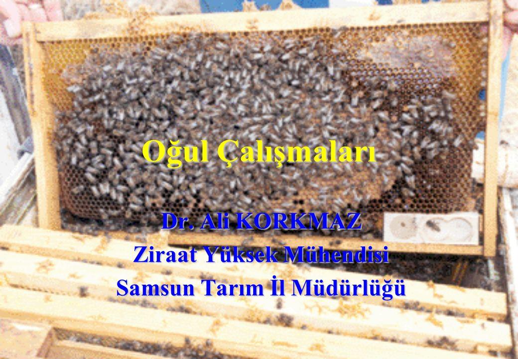 Oğul Çalışmaları Dr. Ali KORKMAZ Ziraat Yüksek Mühendisi Samsun Tarım İl Müdürlüğü