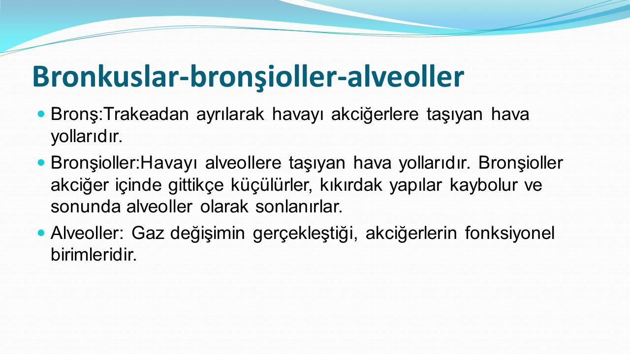 Bronkuslar-bronşioller-alveoller Bronş:Trakeadan ayrılarak havayı akciğerlere taşıyan hava yollarıdır. Bronşioller:Havayı alveollere taşıyan hava yoll