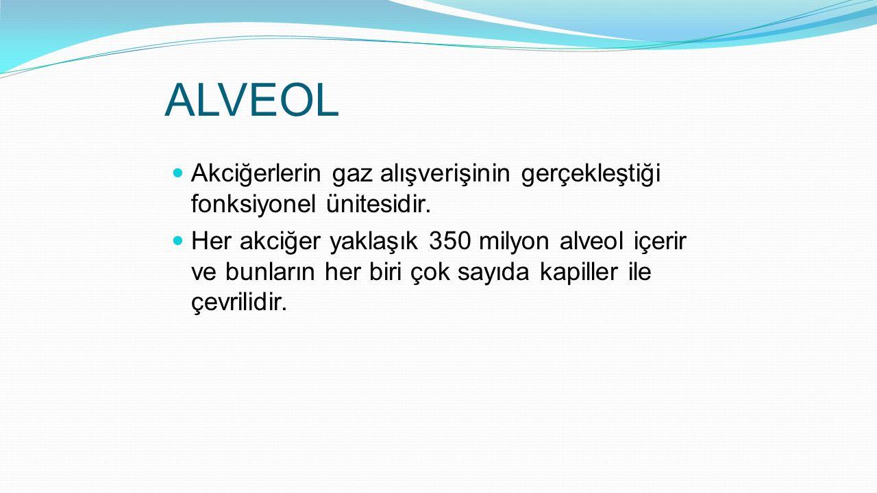 ALVEOL Akciğerlerin gaz alışverişinin gerçekleştiği fonksiyonel ünitesidir. Her akciğer yaklaşık 350 milyon alveol içerir ve bunların her biri çok say