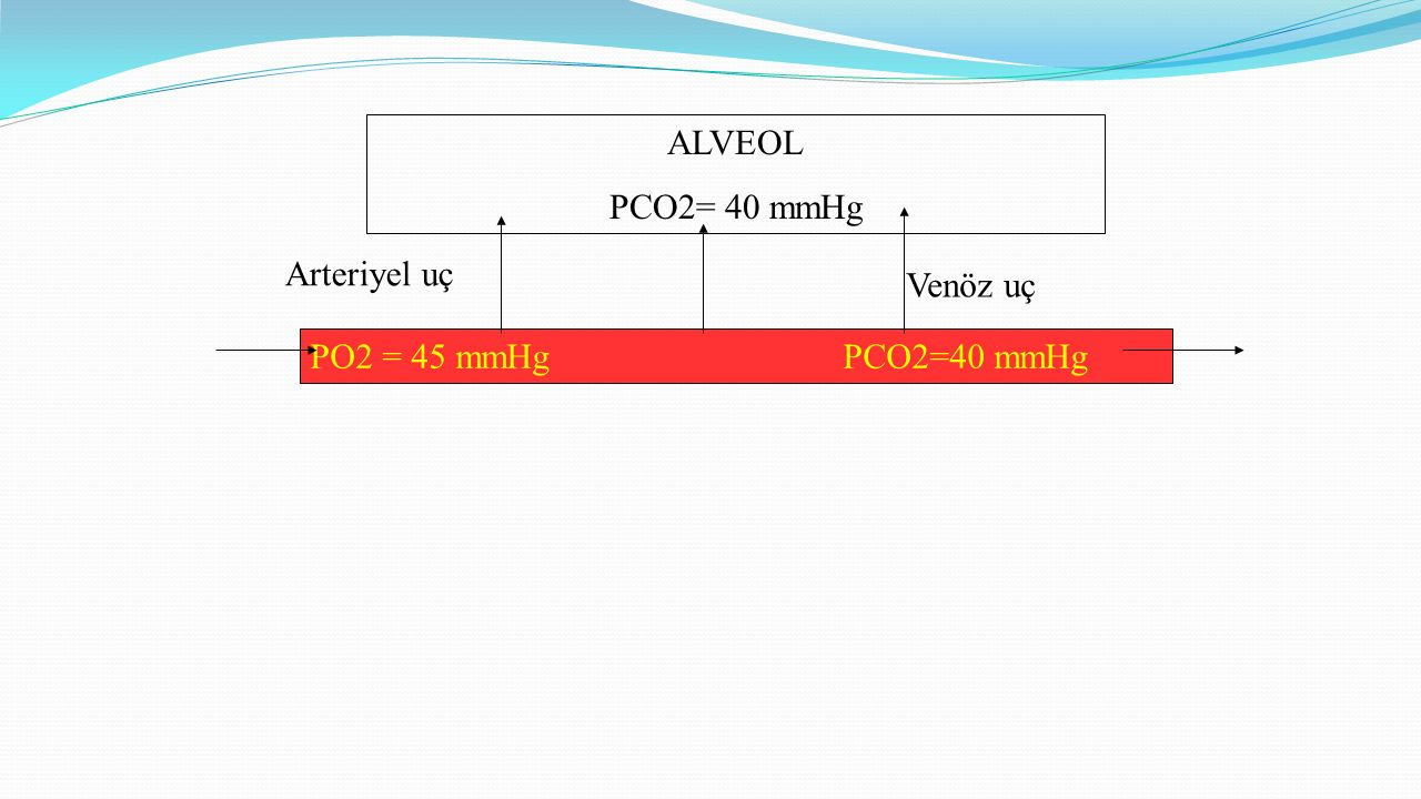 ALVEOL PCO2= 40 mmHg Arteriyel uç PO2 = 45 mmHgPCO2=40 mmHg Venöz uç