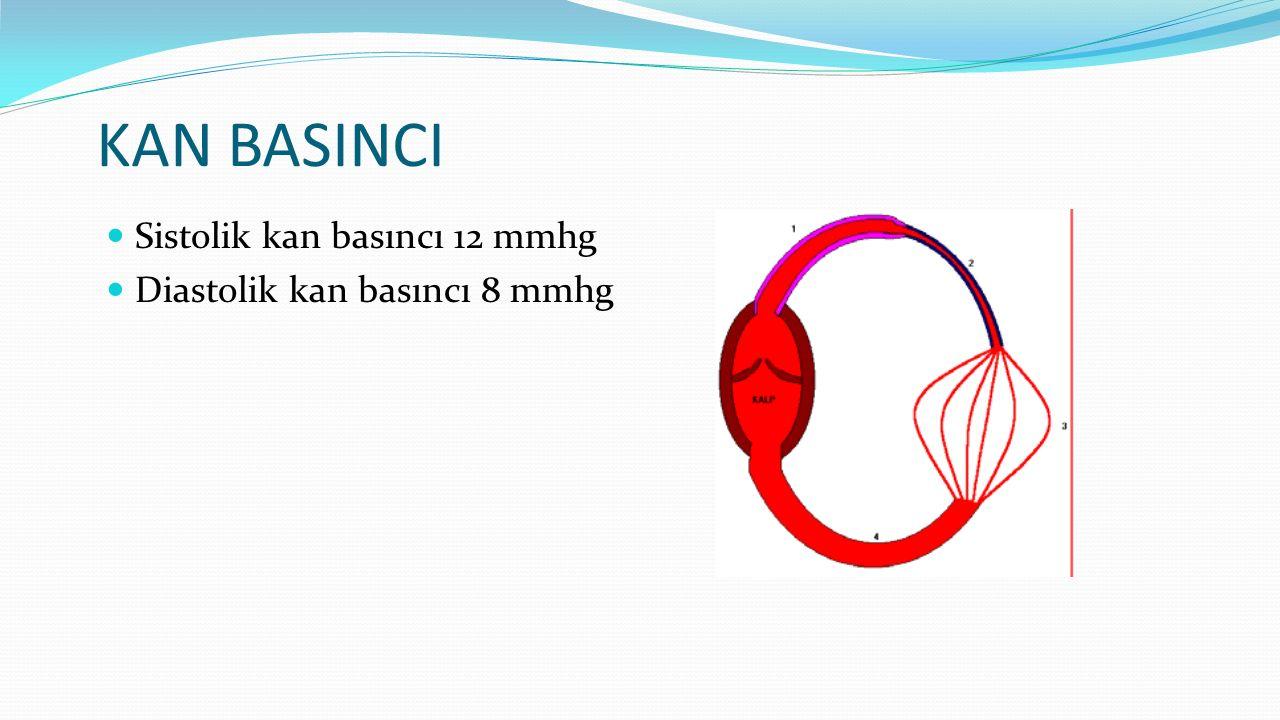 KAN BASINCI Sistolik kan basıncı 12 mmhg Diastolik kan basıncı 8 mmhg