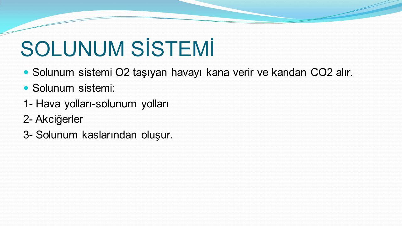 SOLUNUM SİSTEMİ Solunum sistemi O2 taşıyan havayı kana verir ve kandan CO2 alır. Solunum sistemi: 1- Hava yolları-solunum yolları 2- Akciğerler 3- Sol