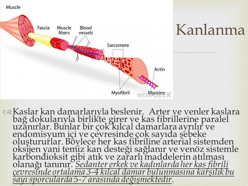   Kaslar kan damarlarıyla beslenir. Arter ve venler kaslara bağ dokularıyla birlikte girer ve kas fibrillerine paralel uzanırlar. Bunlar bir çok kıl