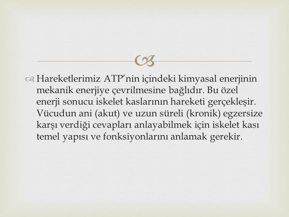   Hareketlerimiz ATP'nin içindeki kimyasal enerjinin mekanik enerjiye çevrilmesine bağlıdır. Bu özel enerji sonucu iskelet kaslarının hareketi gerçe