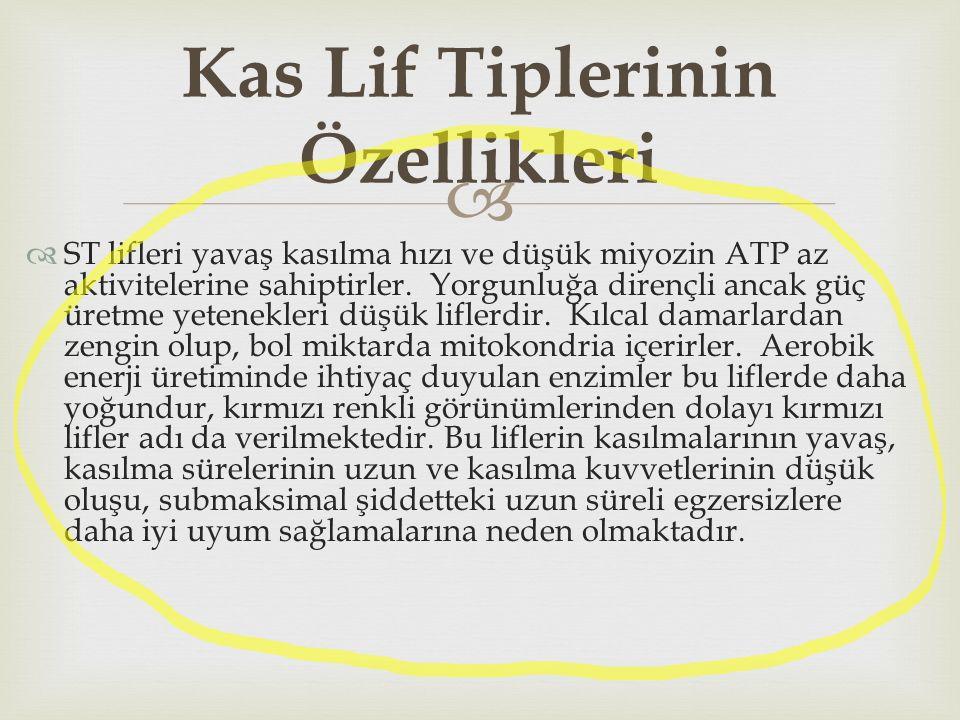   ST lifleri yavaş kasılma hızı ve düşük miyozin ATP az aktivitelerine sahiptirler. Yorgunluğa dirençli ancak güç üretme yetenekleri düşük liflerdir