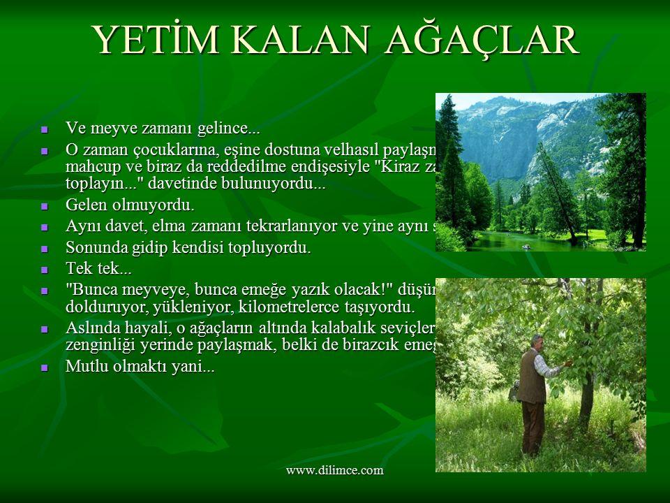 www.dilimce.com YETİM KALAN AĞAÇLAR Ve meyve zamanı gelince...