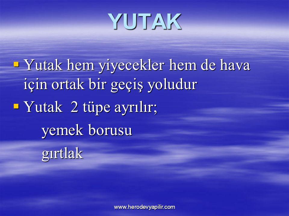 YUTAK  Yutak hem yiyecekler hem de hava için ortak bir geçiş yoludur  Yutak 2 tüpe ayrılır; yemek borusu yemek borusugırtlak www.herodevyapilir.com
