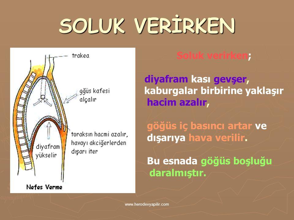 SOLUK VERİRKEN Soluk verirken; diyafram kası gevşer, kaburgalar birbirine yaklaşır hacim azalır, göğüs iç basıncı artar ve dışarıya hava verilir. Bu e