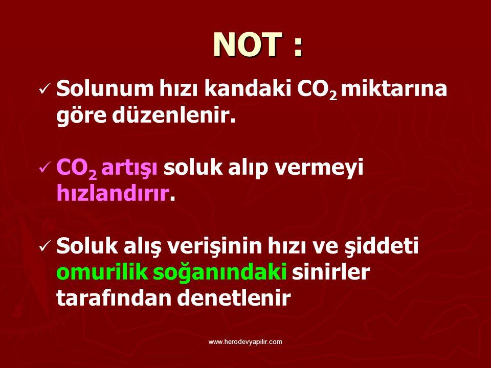 NOT : Solunum hızı kandaki CO 2 miktarına göre düzenlenir. CO 2 artışı soluk alıp vermeyi hızlandırır. Soluk alış verişinin hızı ve şiddeti omurilik s