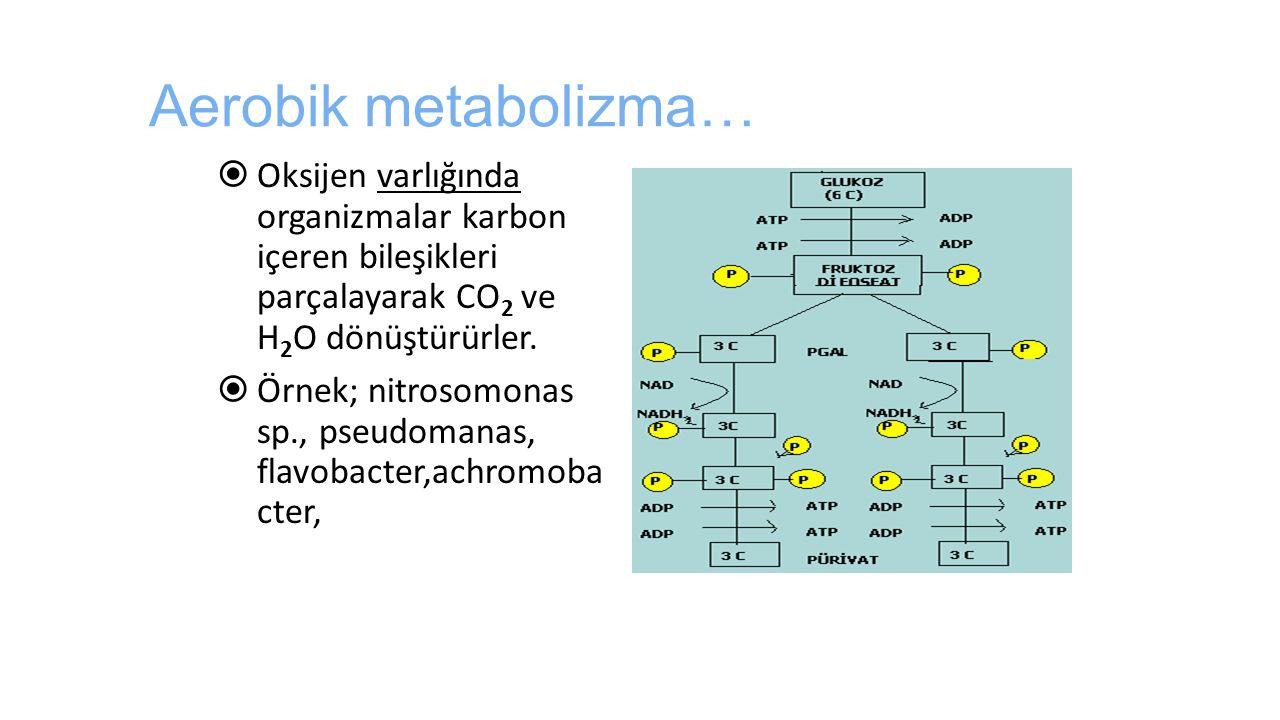 Aerobik metabolizma…  Oksijen varlığında organizmalar karbon içeren bileşikleri parçalayarak CO 2 ve H 2 O dönüştürürler.  Örnek; nitrosomonas sp.,