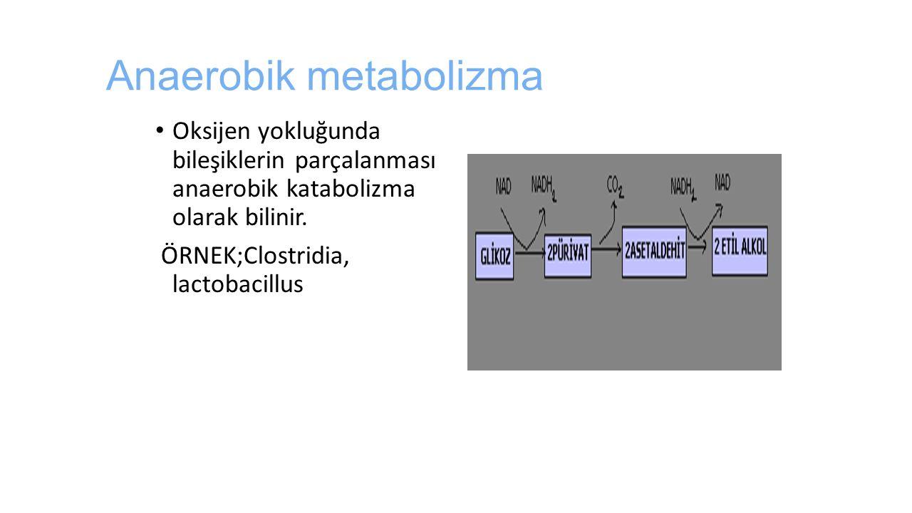 Anaerobik metabolizma Oksijen yokluğunda bileşiklerin parçalanması anaerobik katabolizma olarak bilinir. ÖRNEK;Clostridia, lactobacillus
