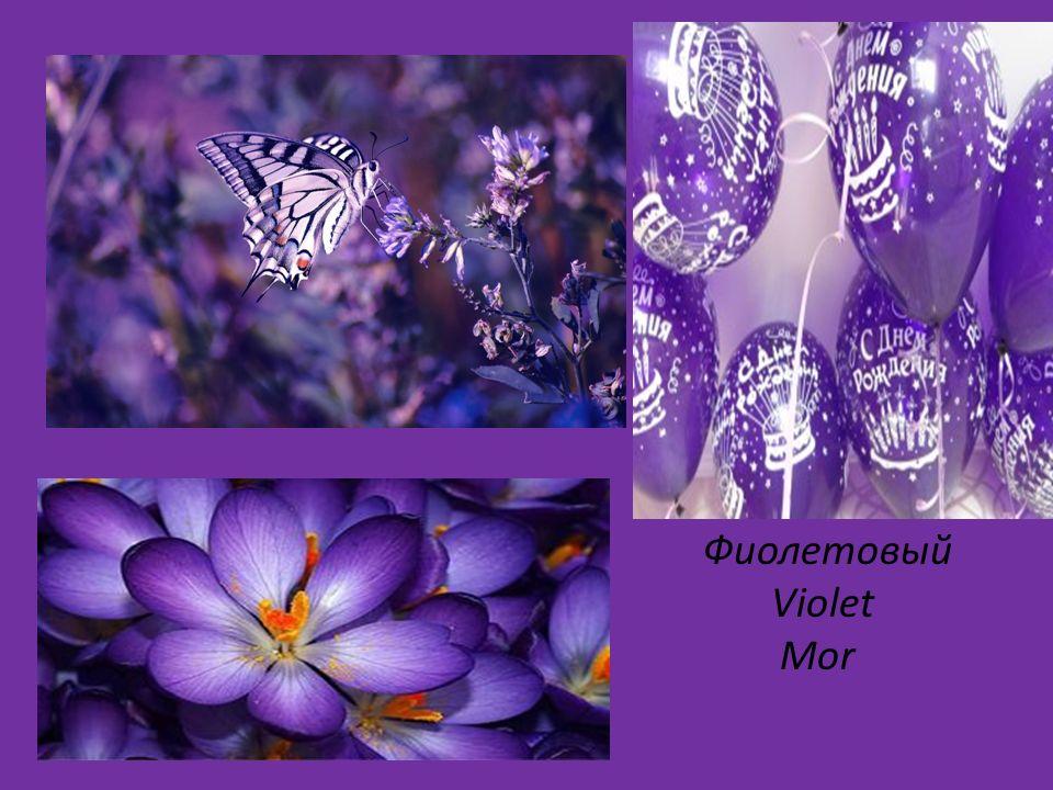 Фиолетовый Violet Mor