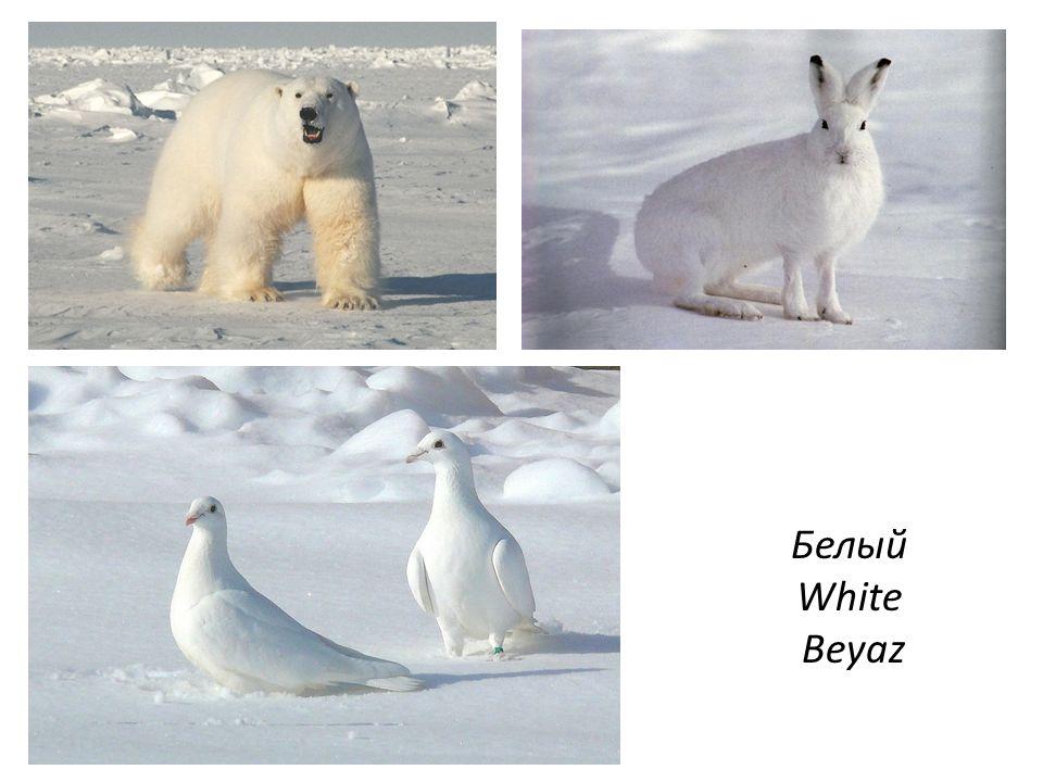 Белый White Beyaz