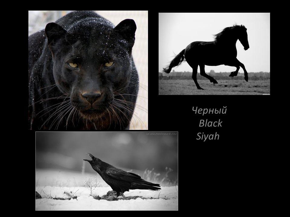 Черный Black Siyah