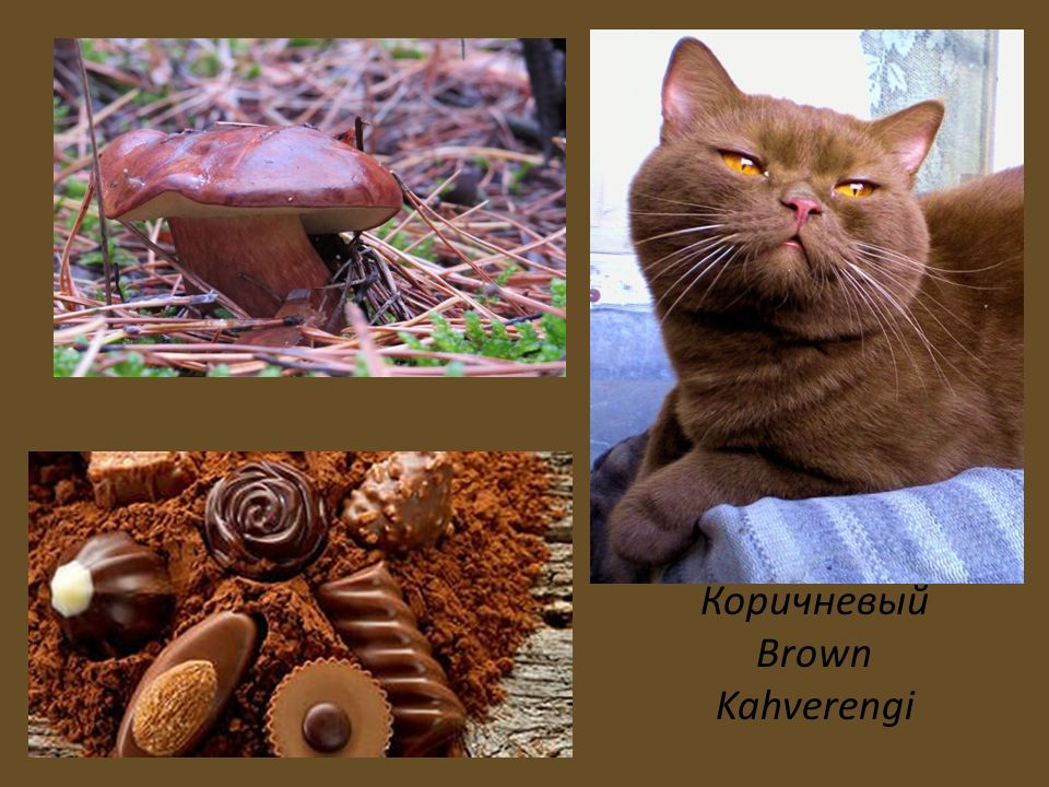 Коричневый Brown Kahverengi