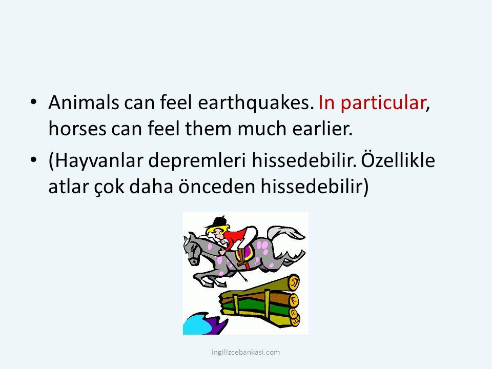 Animals can feel earthquakes. In particular, horses can feel them much earlier. (Hayvanlar depremleri hissedebilir. Özellikle atlar çok daha önceden h