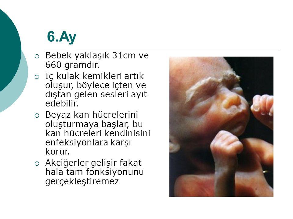 6.Ay  Bebek yaklaşık 31cm ve 660 gramdır.  Iç kulak kemikleri artık oluşur, böylece içten ve dıştan gelen sesleri ayıt edebilir.  Beyaz kan hücrele