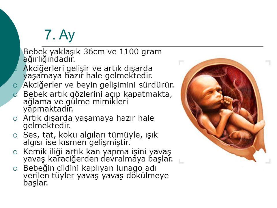 7. Ay  Bebek yaklaşık 36cm ve 1100 gram ağırlığındadır.  Akciğerleri gelişir ve artık dışarda yaşamaya hazır hale gelmektedir.  Akciğerler ve beyin