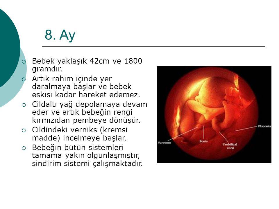 8. Ay  Bebek yaklaşık 42cm ve 1800 gramdır.  Artık rahim içinde yer daralmaya başlar ve bebek eskisi kadar hareket edemez.  Cildaltı yağ depolamaya
