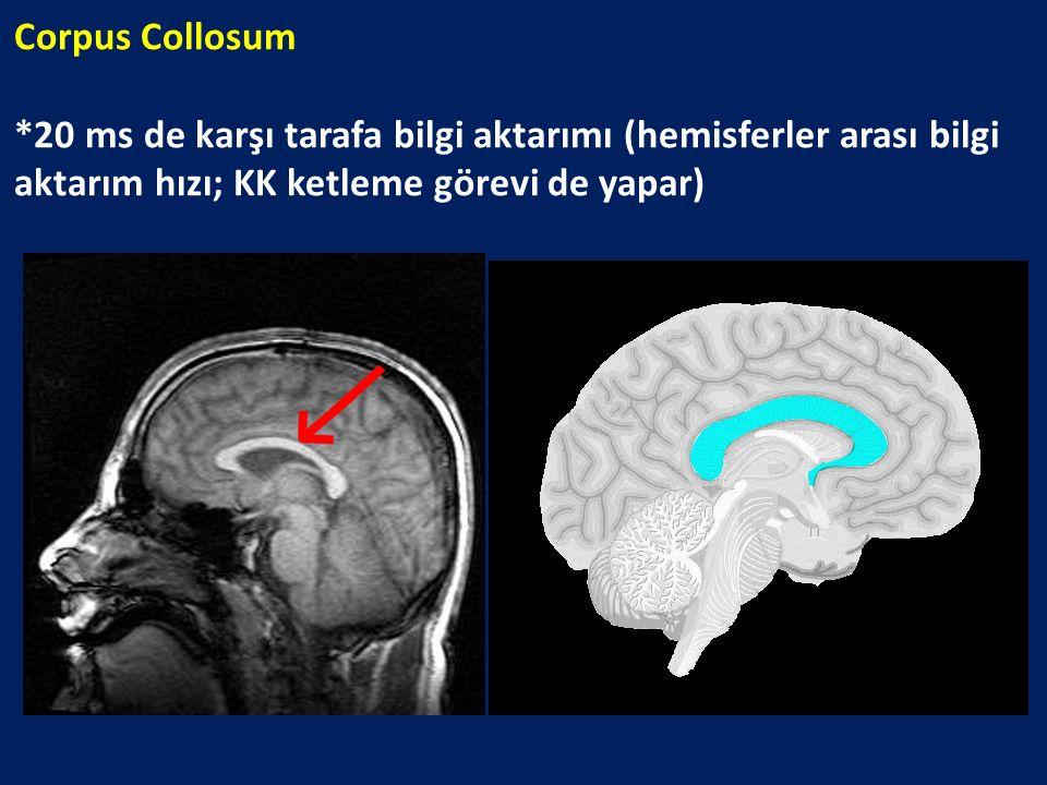 Corpus Collosum *20 ms de karşı tarafa bilgi aktarımı (hemisferler arası bilgi aktarım hızı; KK ketleme görevi de yapar)