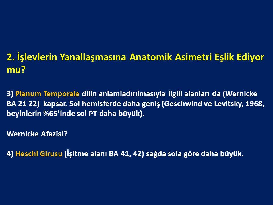 2. İşlevlerin Yanallaşmasına Anatomik Asimetri Eşlik Ediyor mu? 3) Planum Temporale dilin anlamladırılmasıyla ilgili alanları da (Wernicke BA 21 22) k