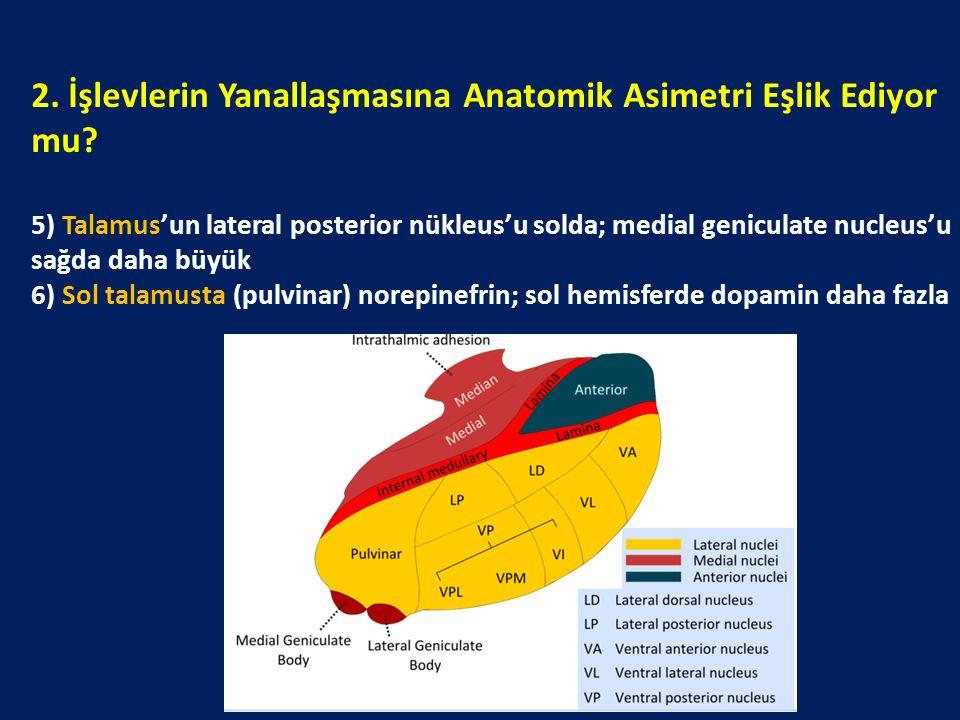 2. İşlevlerin Yanallaşmasına Anatomik Asimetri Eşlik Ediyor mu? 5) Talamus'un lateral posterior nükleus'u solda; medial geniculate nucleus'u sağda dah
