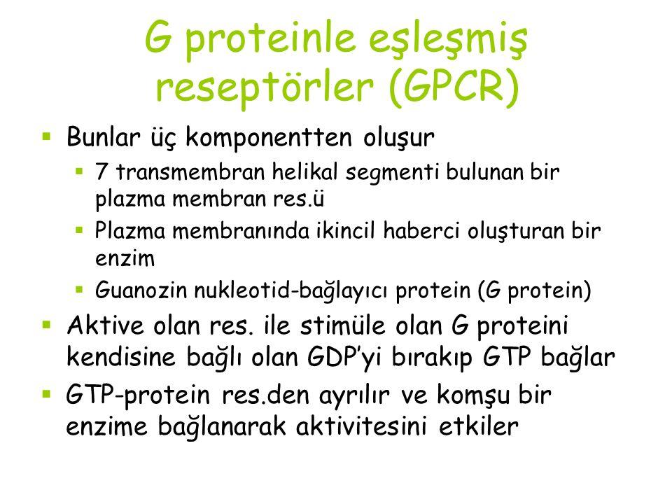 G proteinle eşleşmiş reseptörler (GPCR)  Bunlar üç komponentten oluşur  7 transmembran helikal segmenti bulunan bir plazma membran res.ü  Plazma membranında ikincil haberci oluşturan bir enzim  Guanozin nukleotid-bağlayıcı protein (G protein)  Aktive olan res.