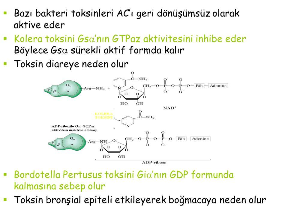  Bazı bakteri toksinleri AC'ı geri dönüşümsüz olarak aktive eder  Kolera toksini Gs  'nın GTPaz aktivitesini inhibe eder Böylece Gs  sürekli aktif formda kalır  Toksin diareye neden olur  Bordotella Pertusus toksini Gi  'nın GDP formunda kalmasına sebep olur  Toksin bronşial epiteli etkileyerek boğmacaya neden olur