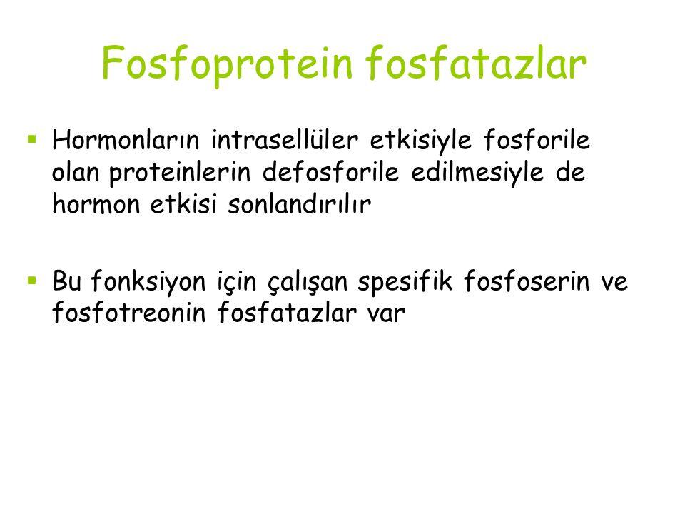 Fosfoprotein fosfatazlar  Hormonların intrasellüler etkisiyle fosforile olan proteinlerin defosforile edilmesiyle de hormon etkisi sonlandırılır  Bu fonksiyon için çalışan spesifik fosfoserin ve fosfotreonin fosfatazlar var