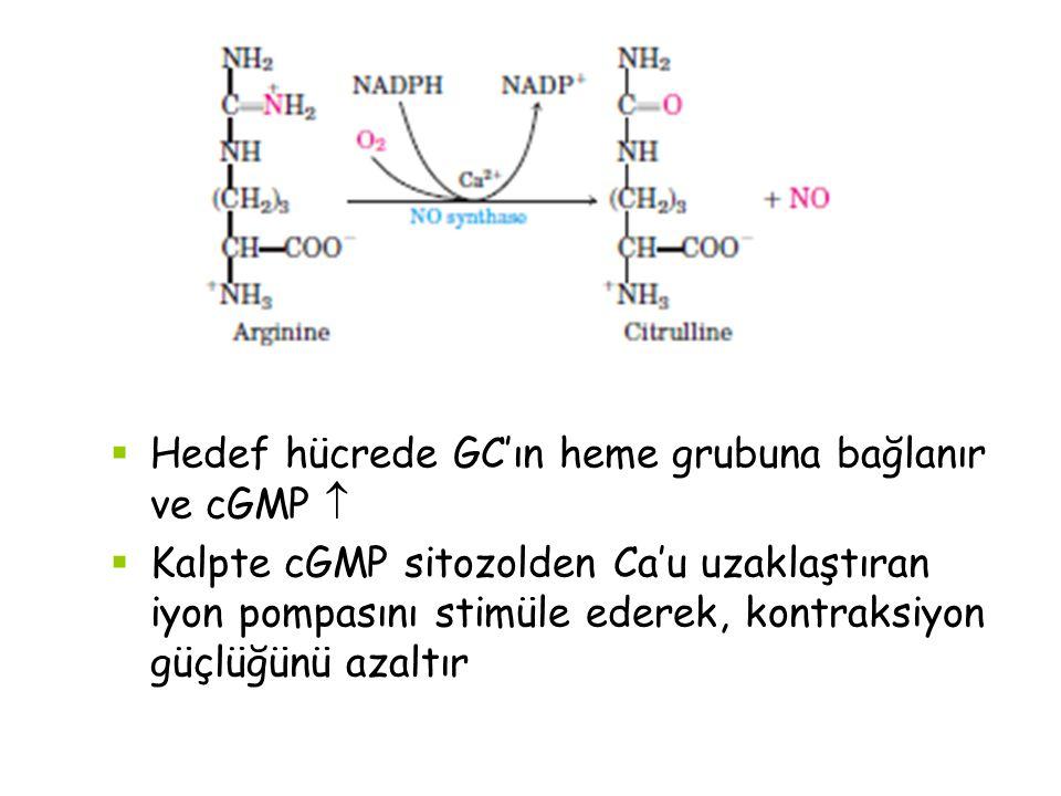  Hedef hücrede GC'ın heme grubuna bağlanır ve cGMP   Kalpte cGMP sitozolden Ca'u uzaklaştıran iyon pompasını stimüle ederek, kontraksiyon güçlüğünü azaltır