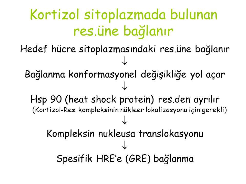 Kortizol sitoplazmada bulunan res.üne bağlanır Hedef hücre sitoplazmasındaki res.üne bağlanır  Bağlanma konformasyonel değişikliğe yol açar  Hsp 90 (heat shock protein) res.den ayrılır (Kortizol-Res.