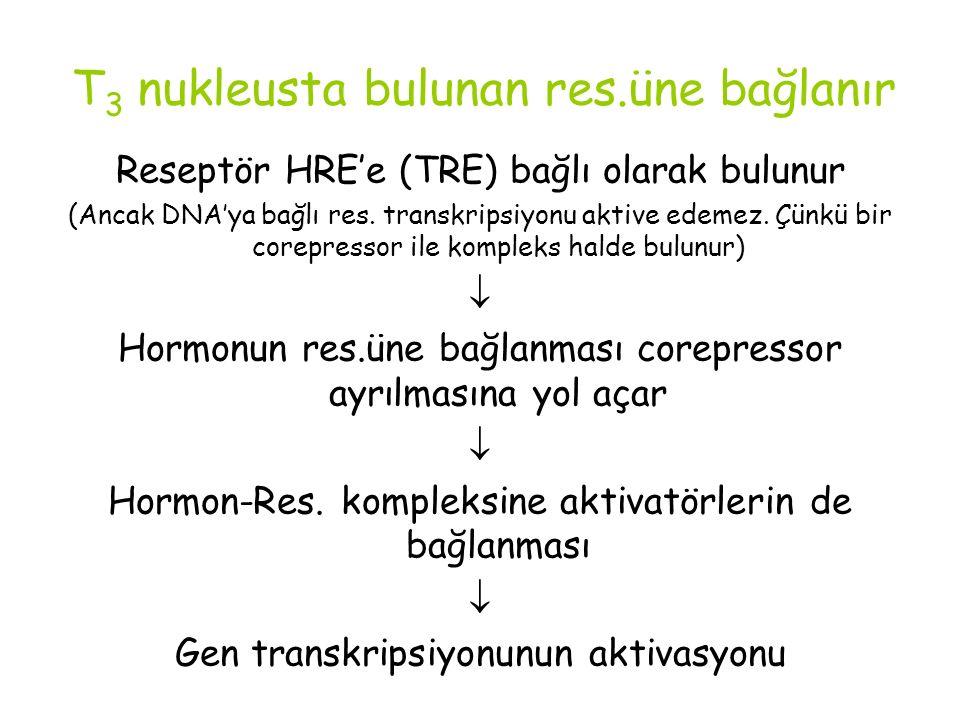 T 3 nukleusta bulunan res.üne bağlanır Reseptör HRE'e (TRE) bağlı olarak bulunur (Ancak DNA'ya bağlı res. transkripsiyonu aktive edemez. Çünkü bir cor