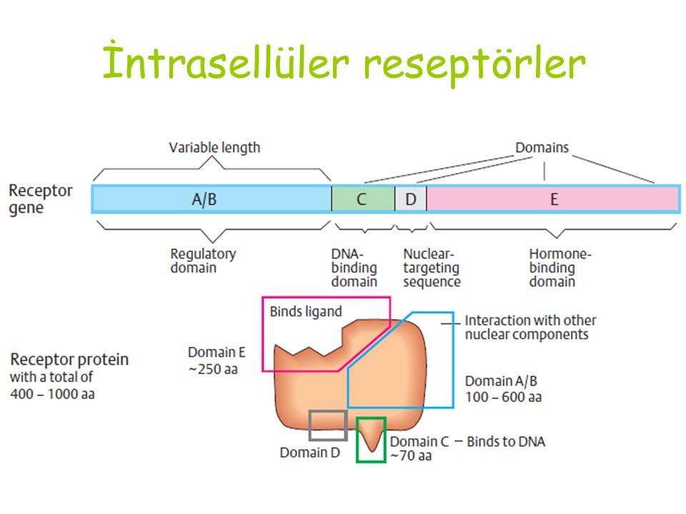 İntrasellüler reseptörler