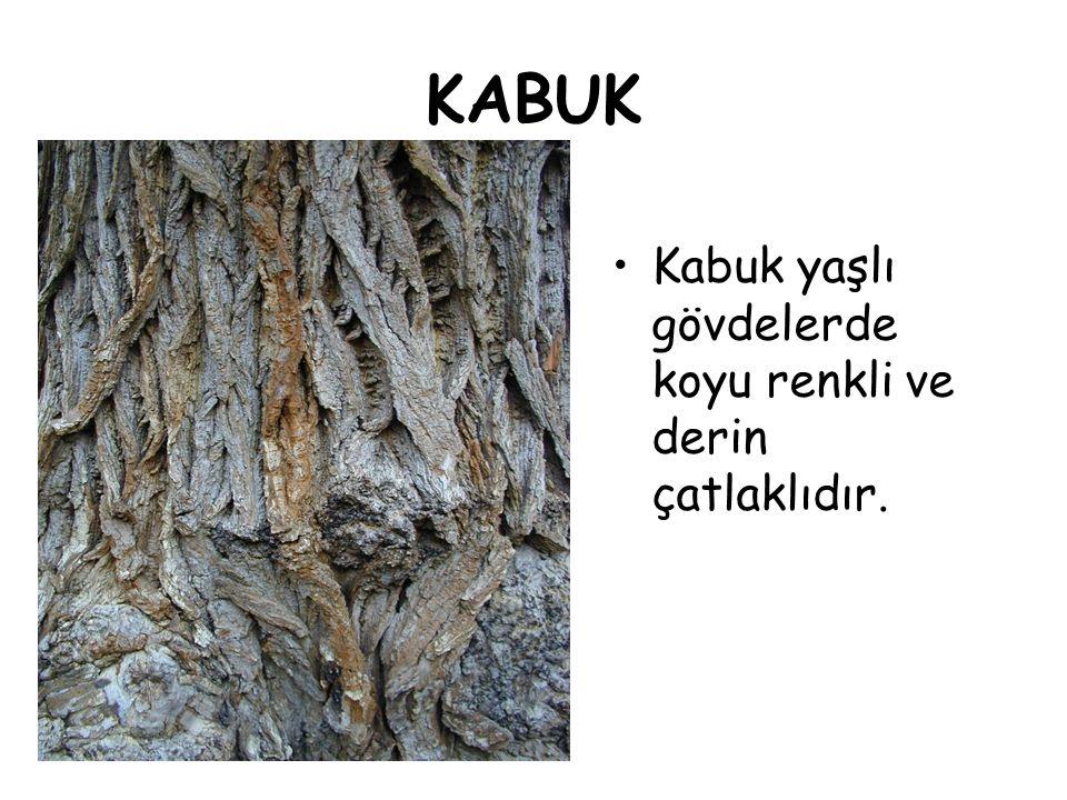 KABUK Kabuk yaşlı gövdelerde koyu renkli ve derin çatlaklıdır.