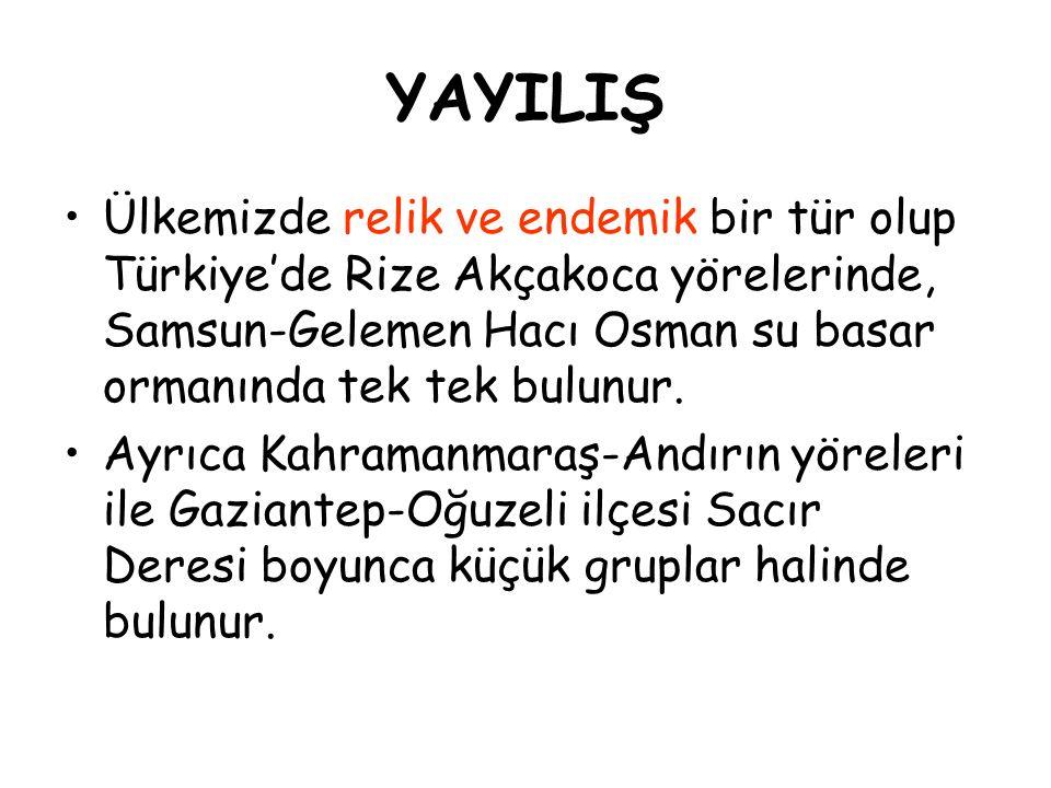 YAYILIŞ Ülkemizde relik ve endemik bir tür olup Türkiye'de Rize Akçakoca yörelerinde, Samsun-Gelemen Hacı Osman su basar ormanında tek tek bulunur.