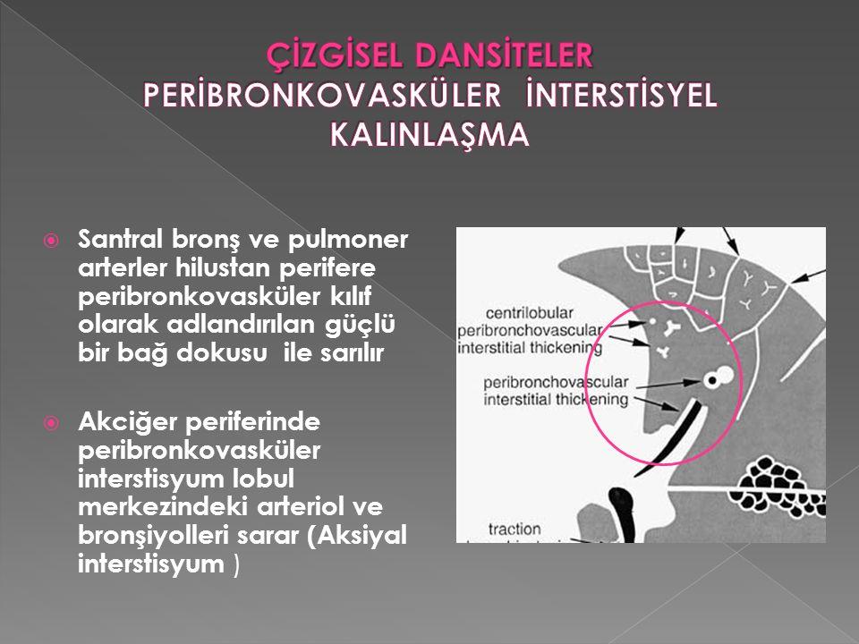  Santral bronş ve pulmoner arterler hilustan perifere peribronkovasküler kılıf olarak adlandırılan güçlü bir bağ dokusu ile sarılır  Akciğer perifer