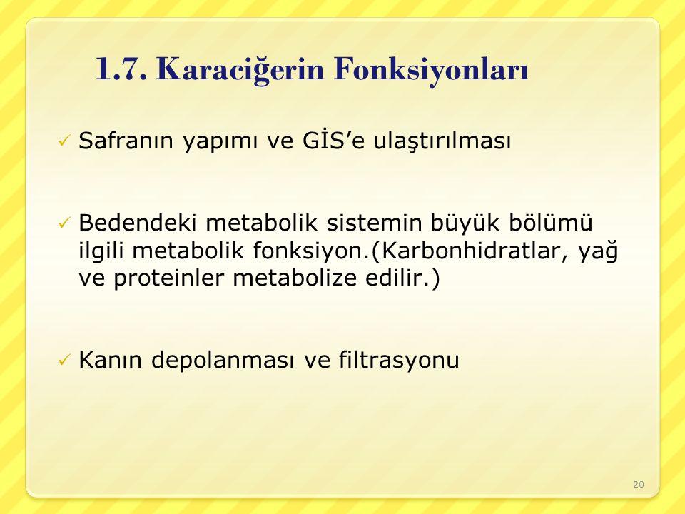 1.7. Karaci ğ erin Fonksiyonları Safranın yapımı ve GİS'e ulaştırılması Bedendeki metabolik sistemin büyük bölümü ilgili metabolik fonksiyon.(Karbonhi