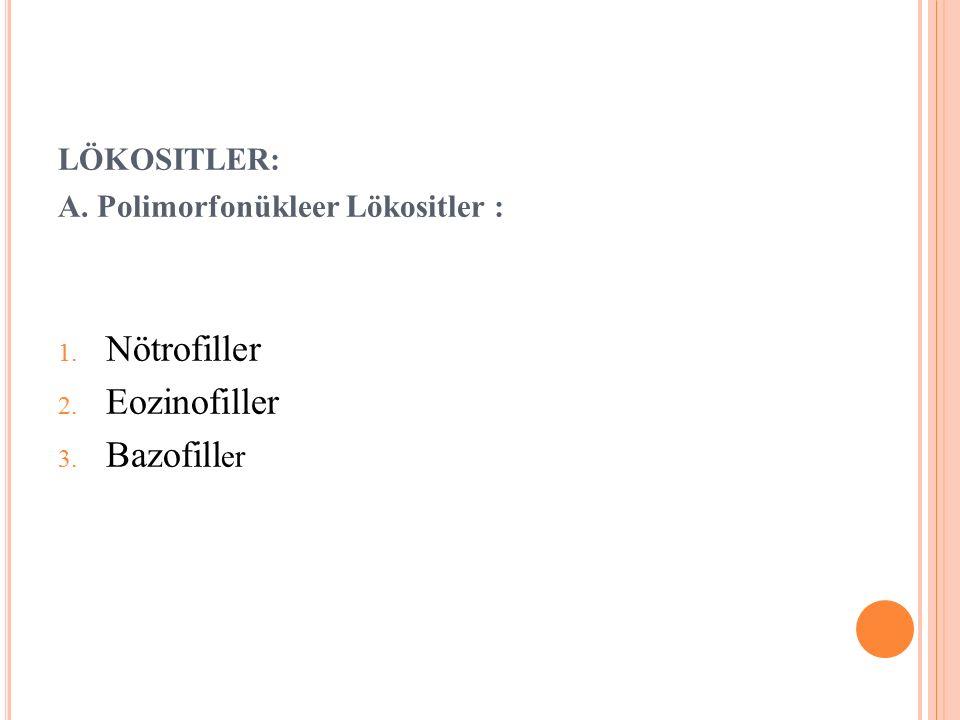 LÖKOSITLER: A. Polimorfonükleer Lökositler : 1. Nötrofiller 2. Eozinofiller 3. Bazofill er