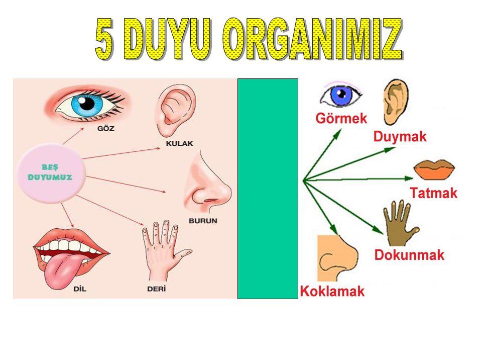 Duyu organlarımız 5 tanedir. Bunlar, 1. Göz 2. Kulak 3. Burun 4. Dil 5. Deri