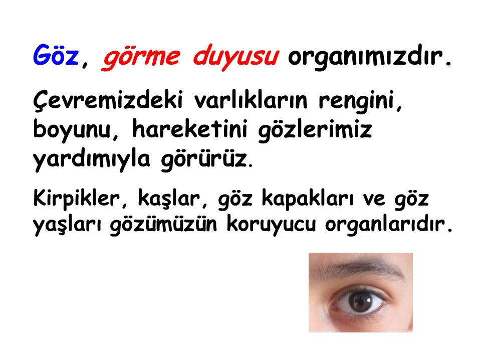 Göz, görme duyusu organımızdır.