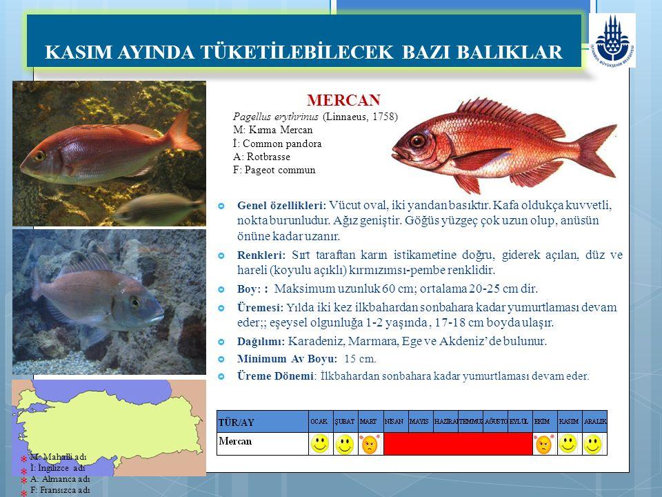 MERCAN Pagellus erythrinus (Linnaeus, 1758) M: Kırma Mercan İ: Common pandora A: Rotbrasse F: Pageot commun KASIM AYINDA TÜKETİLEBİLECEK BAZI BALIKLAR  Genel özellikleri: Vücut oval, iki yandan basıktır.