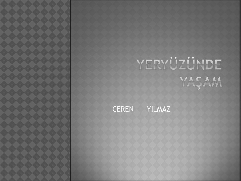 CEREN YILMAZ